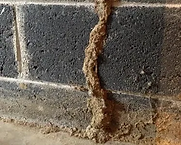 termite inspection south jersey.webp