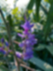 indigo-variety-400x533.jpg