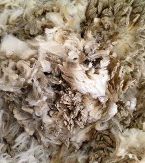 Washing Raw Wool