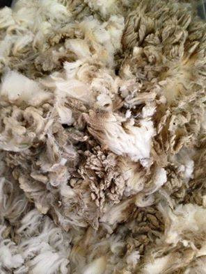 Washing Raw Wool
