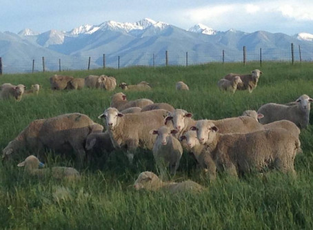 Improving the Quality of Your Fleece