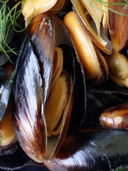 MUSSELS FROM LAS RIAS GALLEGAS IN SOTAVENTO SAUCE