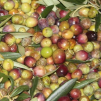 EVOO COUPAGE HIGH LEVELS OF POLYPHENOLS