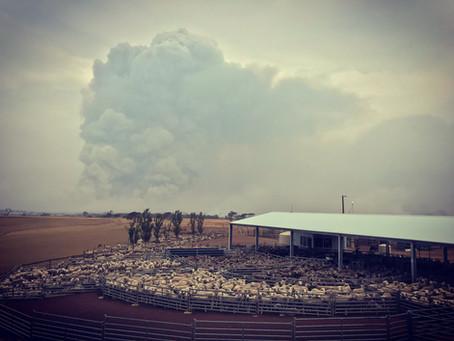 Our Bushfire Story