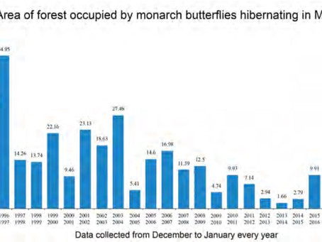 Researchers suggesting bees and butterflies are at risk of major losses
