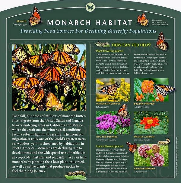 Outdoor-Interpretive-Sign-Monarch-Butter