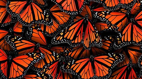 Monarch Wallpaper.jpg