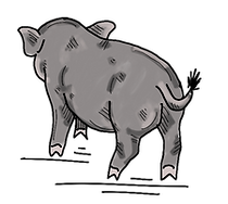 Grey Pig For Art Gallery.png