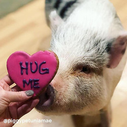 Here's a virtual hug for you!❤️🐷_._._