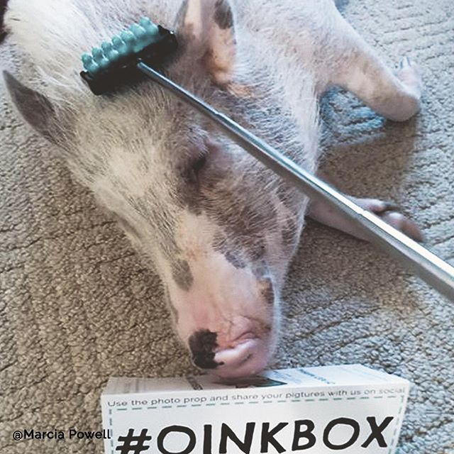 Weekends are made for piggy pampering!_.