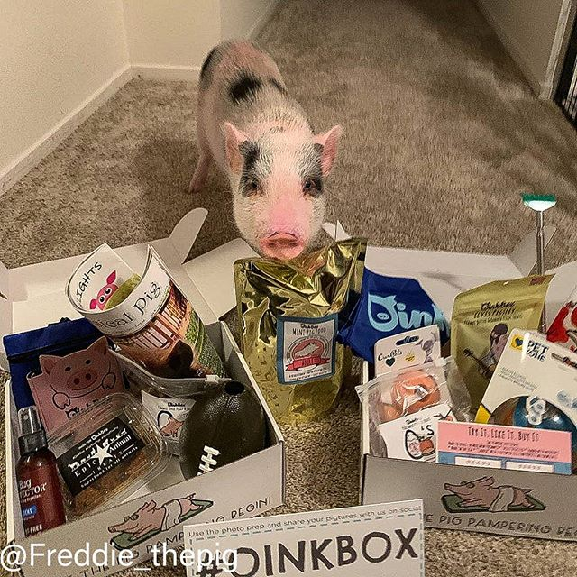 Jackpot! _freddie_thepig is one pampered
