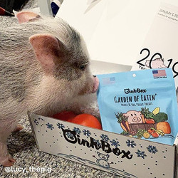 We L❤️VE seeing all the shared pigtures