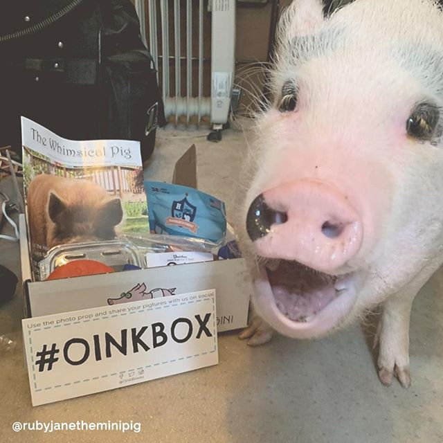 The excitment of #OinkBox day for your p