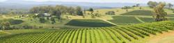 Valley-Vineyardsv2-2400x600