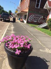 Main Street Flowering