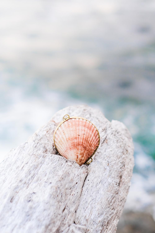 Sea shell locket on a rock overlooking the ocean