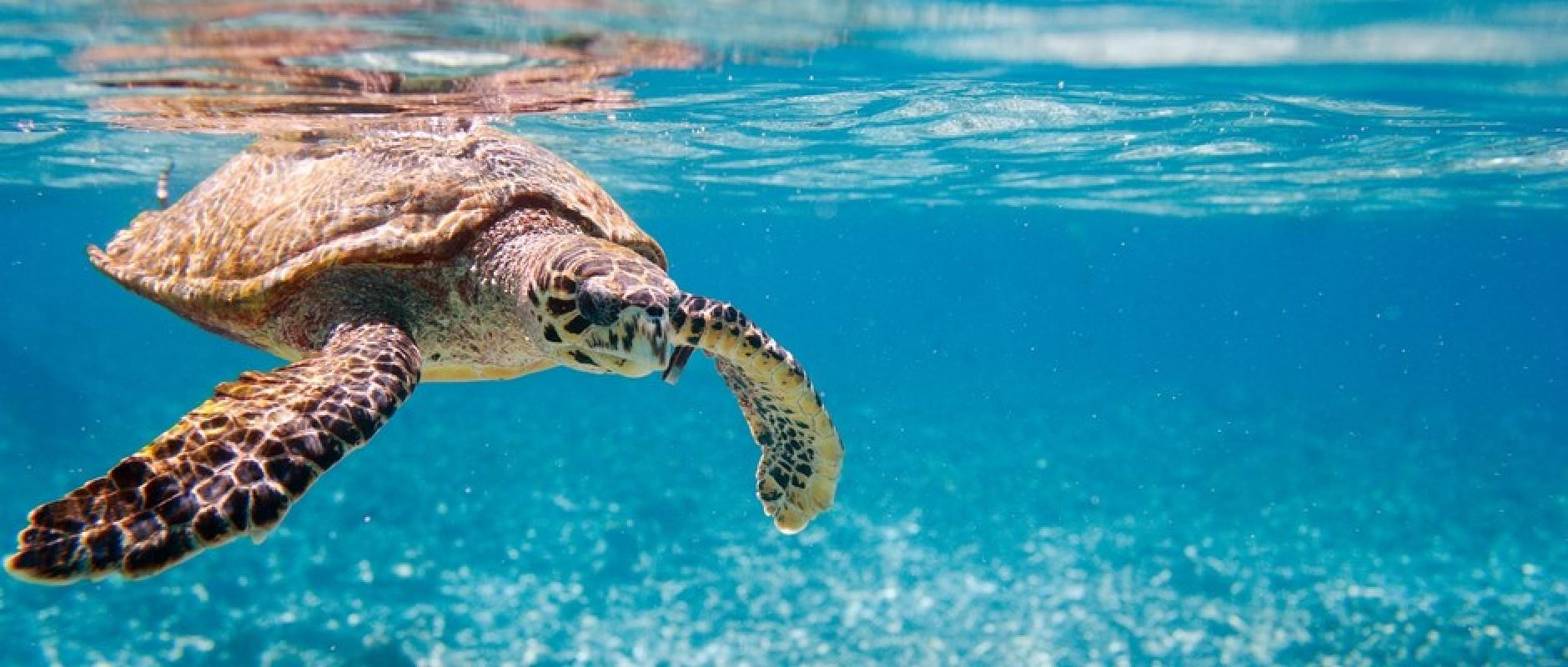 Turtle Diving Seychelles