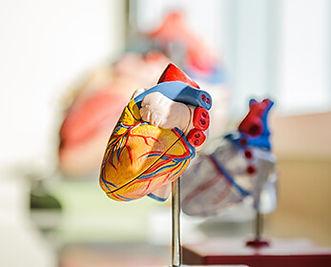 Heart-model.jpg