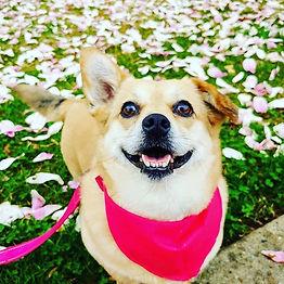 Pretty Penny in Pink 💓 _j_ketch_._._._.