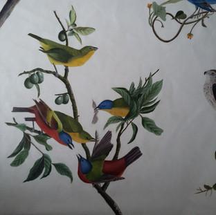 Les oiseaux d'Amérique - détail