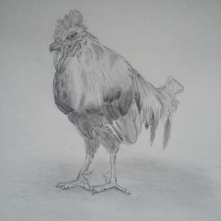 Le coq sur ses ergots