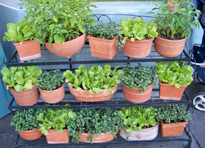 Green Corner:  Plant a Tree, or Start Gardening and Composting While at Home.