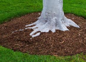 Mulching Landscape Trees