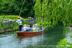 花菖蒲咲く柳川の川下り