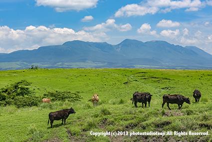 九重連山を背景に阿蘇の放牧