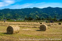 久留米市の農村風景