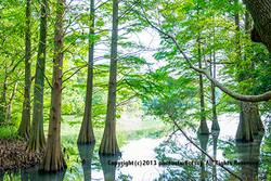 篠栗 九大の森
