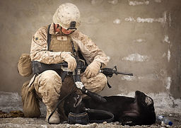 working-dog-1781151_1920.jpg