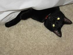 sadie cat