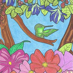Birdbrain photo Hummingbird.jpg