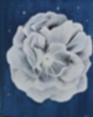 cosmic white      92 SUR 73.JPG