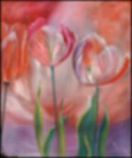Tulipes_66_H_SUR_56_(encadré).jpg