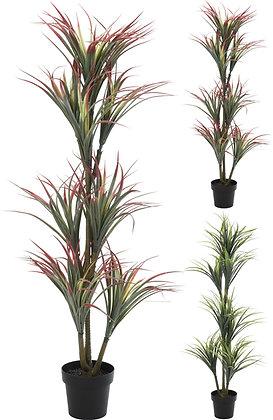 Plante Yucca 150cm