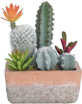 Kaktus i potte