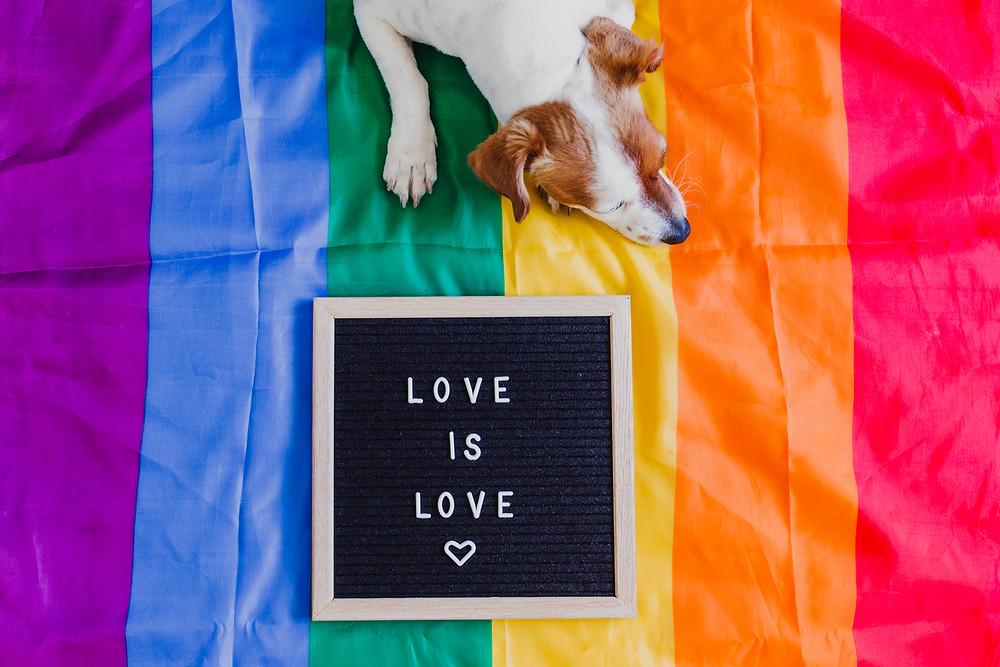 Cute dog jack sitting on rainbow LGBT flag in bedroom