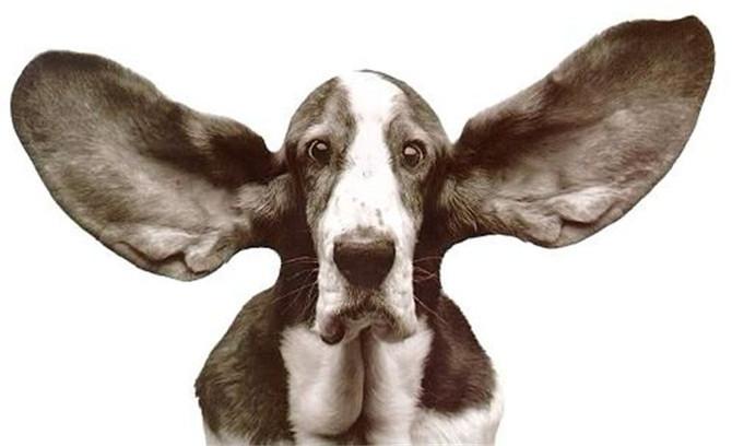 Ohrpflege ist wichtig - auch wenn Ihr Hund das nicht so mag