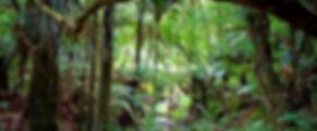 native-forest.jpg