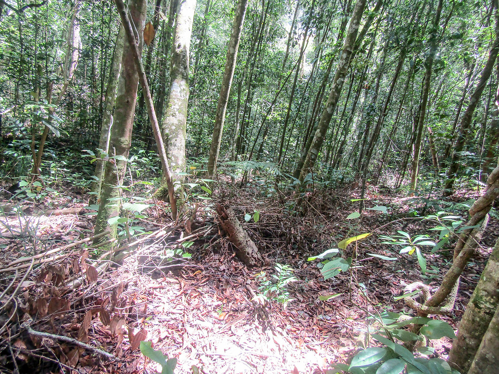 This snare fence is 2km long in the forest. © Minh Nguyen