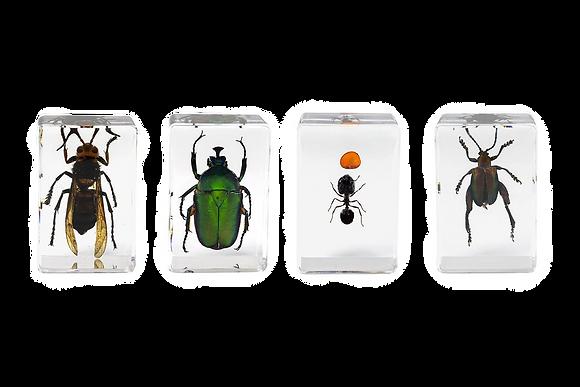 Celestron 3D Bug Specimen Kit