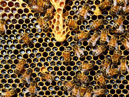 Faktencheck Biene: Warum brauchen wir sie so sehr?