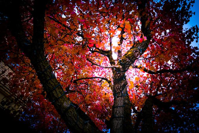 fall sherman.jpg