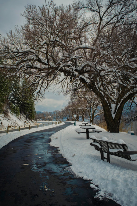 Winter Path sml.jpg