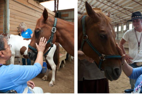Caring for Horses Eases Symptoms of Dementia