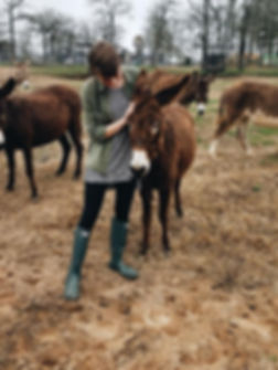 HWL.donkey