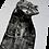 Thumbnail: Le racoon