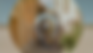 vlcsnap-2019-12-01-13h41m58s425.png
